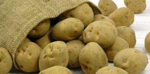 馬鈴薯はデンプン原料としても利用されます