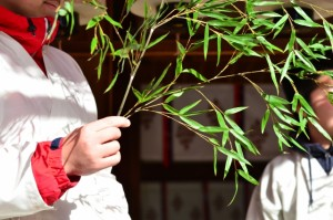 笹は、神道における神聖な象徴として選ばれたものです