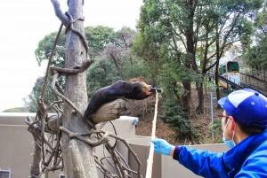 福岡市動物園で節分に行われるイベントは必見ですよ!