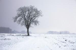四季の中でも冬は、表現の素晴らしさが大変新鮮です