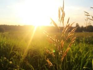 五穀には霊力があり、しかも魔滅だから厄除けがある。