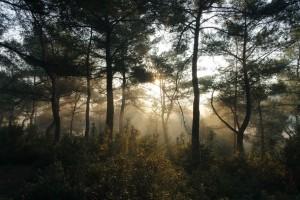 ウィーンの森の風景がタンホイザーの曲想にマッチします