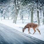 十日町雪まつり「おまつりひろば」