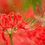 gardening-201409-09