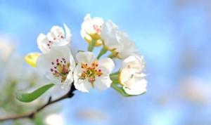 春の彼岸は彼岸、秋の彼岸はのちの彼岸と表現します。