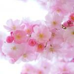 神戸、奈良、お花見デート