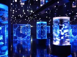 円柱と楕円型の水槽が独特の幻想的空間を創り出します