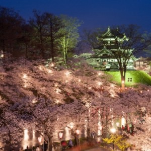 高田城址が公園になっており観桜会の舞台にもなっています
