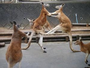 5月4日はなんと都立の動物園が無料になるんですよ!