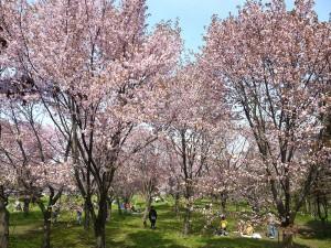 モエレ沼公園はイサムノグチ氏が設計した美しい公園です