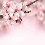 仙台、おすすめ、お花見スポット、屋台